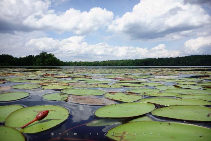 Yr4•279/365 On Lake July 7, 2013