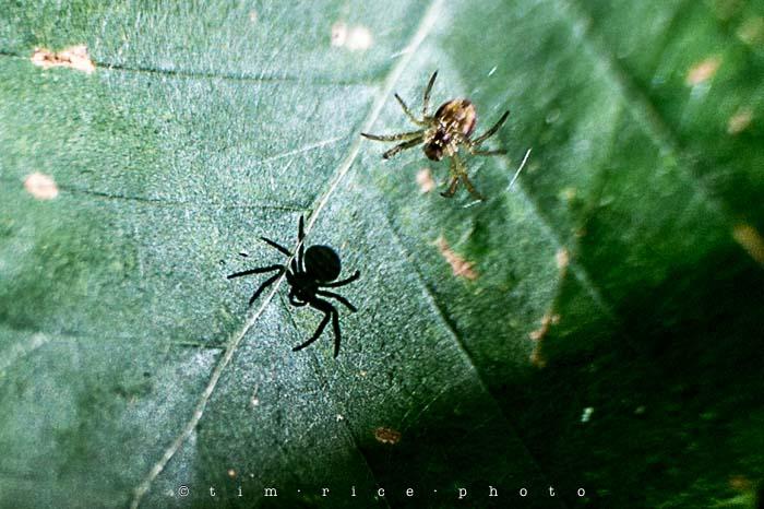 Yr4•330/365 Spider Signal August 27, 2013