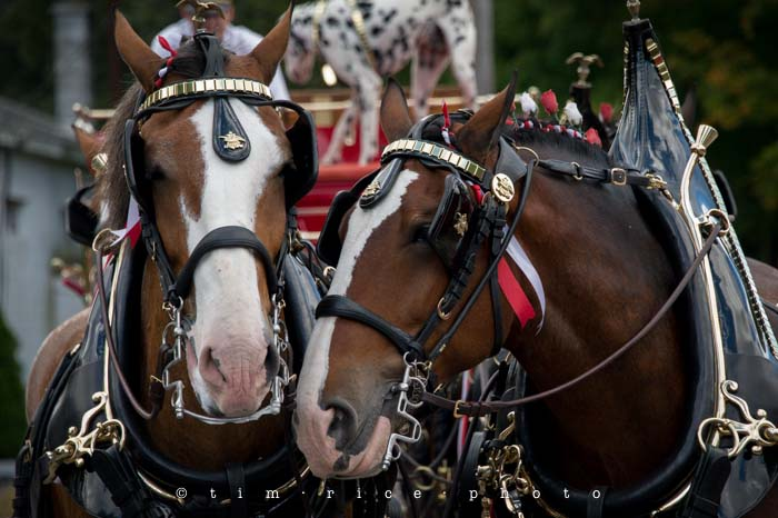 Yr4•355/365 Clydesdales September 21, 2013
