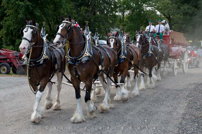 Yr4•355-365•Clydesdales