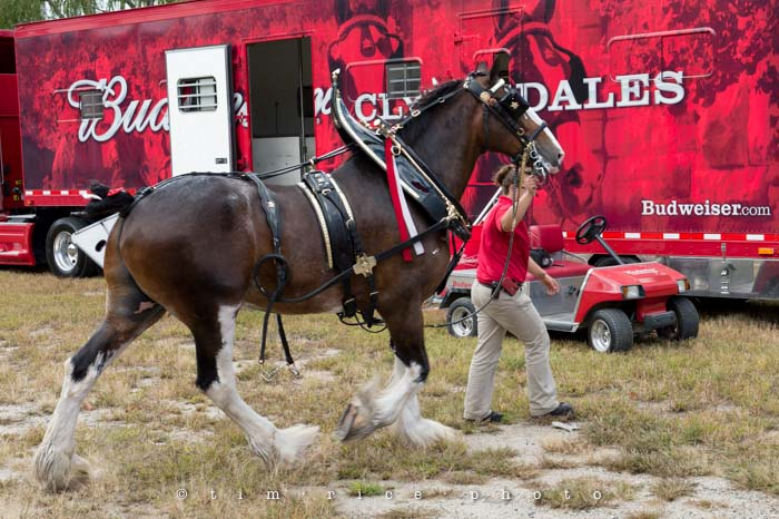 Yr4•356-365•Clydesdales