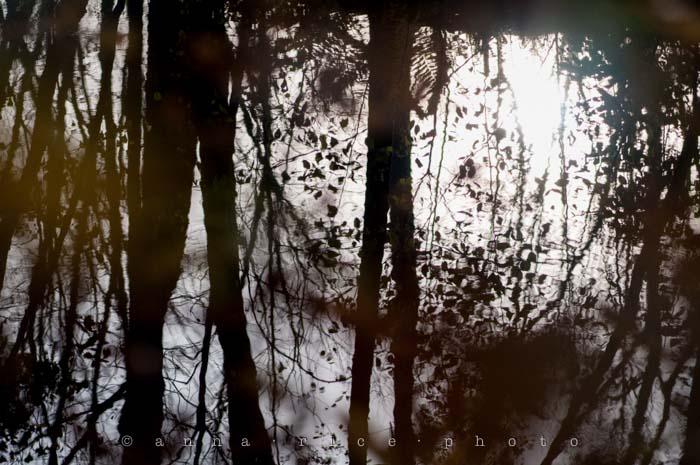 Yr5•012-365•Anna's Leaf