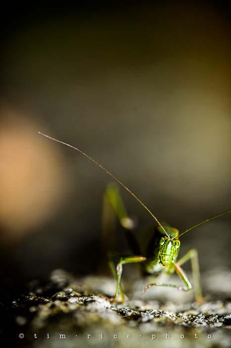 Yr5•024-365•1484•Grasshopper