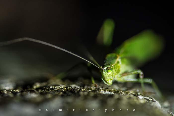 Yr5•025-365•1484•Grasshopper