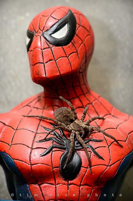 Yr5•044-365•1505•Spider(Man)