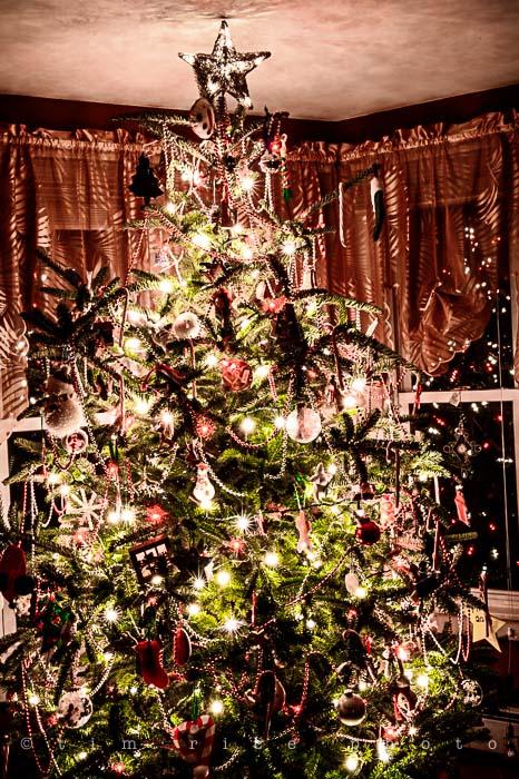 Yr5•081/365•1542 Tree 2013 December 20, 2013