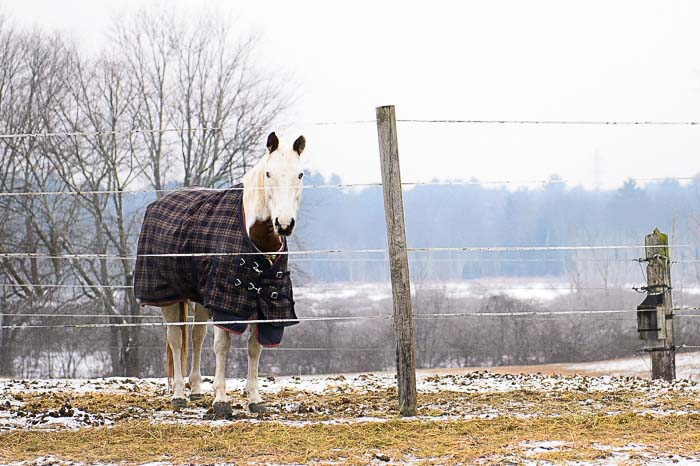 Yr5•102/365•1563 Single Horse, Winter Day January 10, 2014
