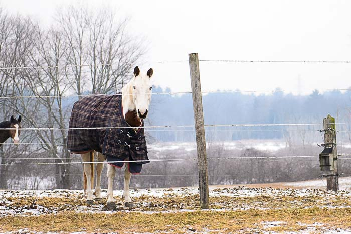 Yr5•102-365•1563•Single Horse, Winter Day