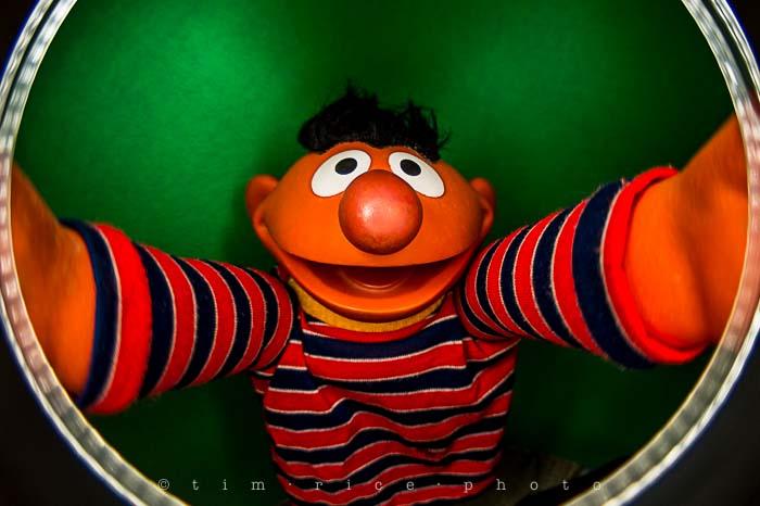 Yr5•112-365•1573•Looking at Ernie
