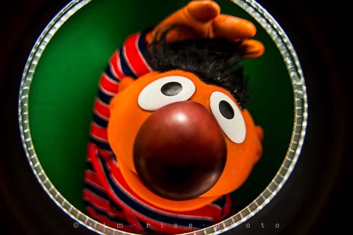 Yr5•116-365•1573•Looking at Ernie
