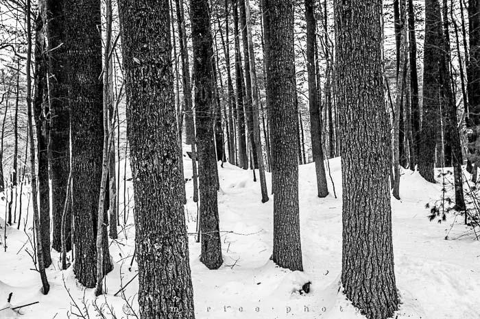 Yr5•133-365•1593•A Winter Falls