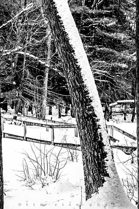 Yr5•135-365•1593•A Winter Falls