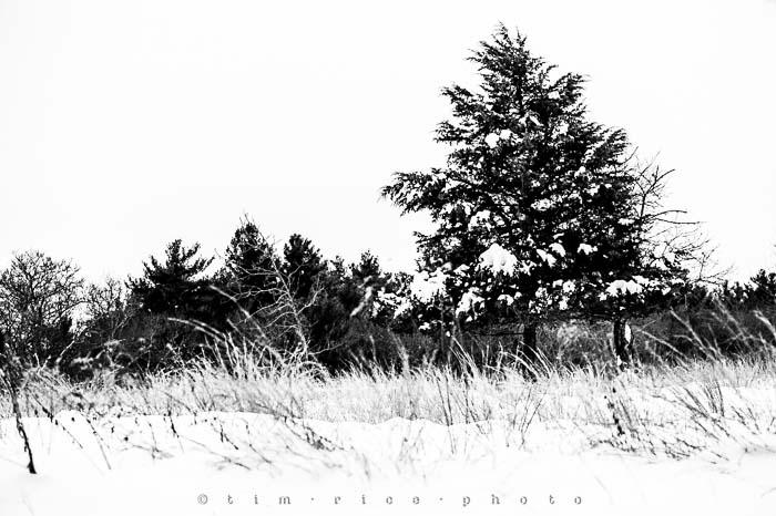 Yr5•139-365•1593•A Winter Falls