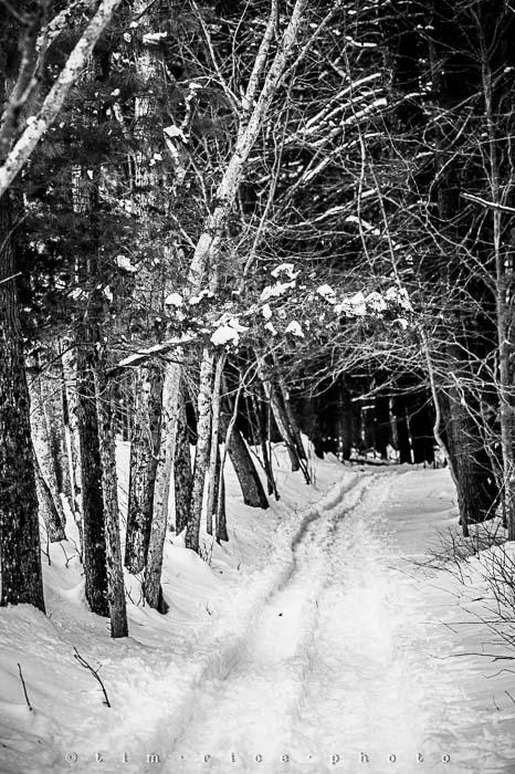 Yr5•140-365•1593•A Winter Falls