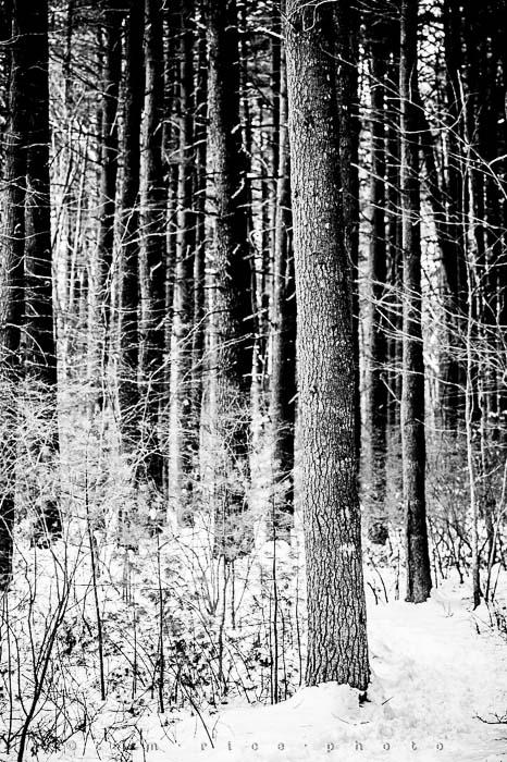 Yr5•142-365•1593•A Winter Falls