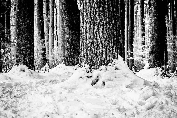Yr5•143-365•1593•A Winter Falls