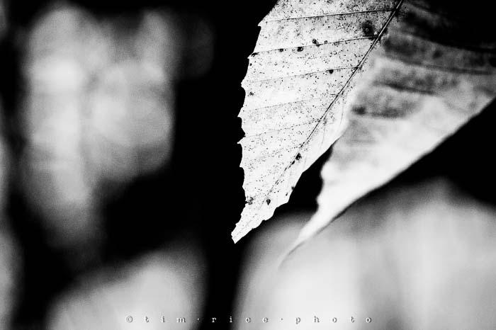Yr5•146-365•1593•A Winter Falls