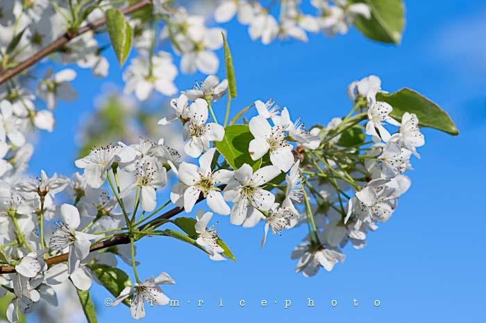 Yr5•217-365•1678•Spring Day