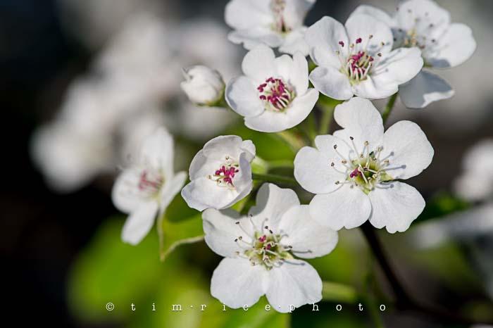 Yr5•218-365•1678•Spring Day