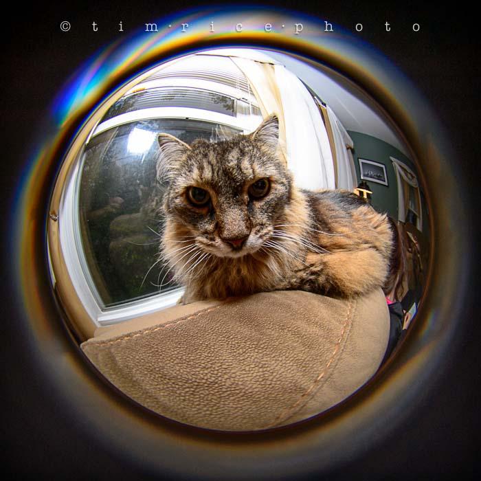 Yr5•247/365•1708• Cat-fisheye June 5, 2014