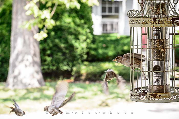 Yr5•275-365•1736•Bird Cage