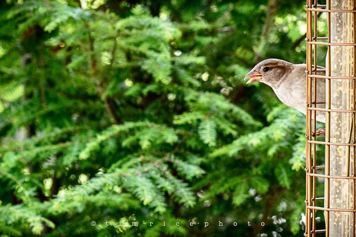 Yr5•277-365•1736•Bird Cage
