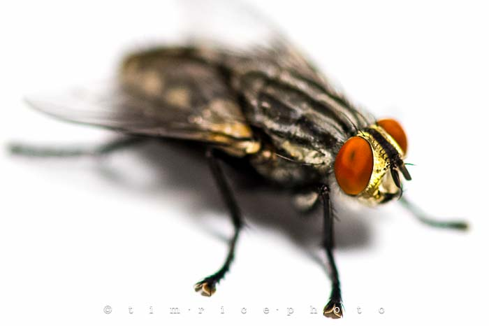 Yr5•300/365•1761 The Fly July 28, 2014