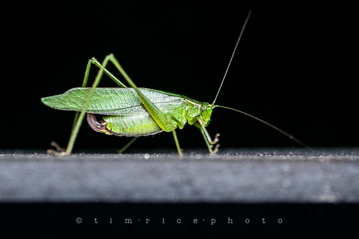 Yr5•351/365•1812 The Hopper September 16, 2014