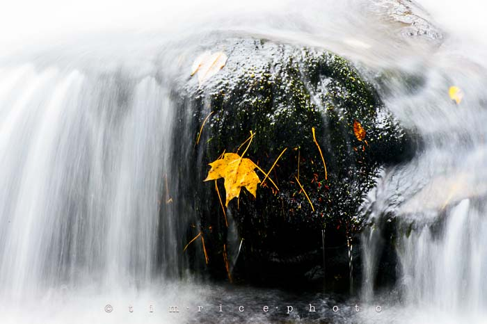 Yr6•009-365•1830•Jackson Falls in the Rain