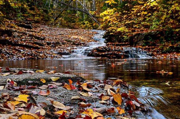 Yr6•009-365•1831•Autmn Falls
