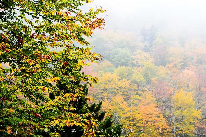 Yr6•012-365•1830•Jackson Falls in the Rain