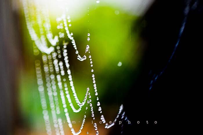 Yr6•024-365•1849• Wet Web