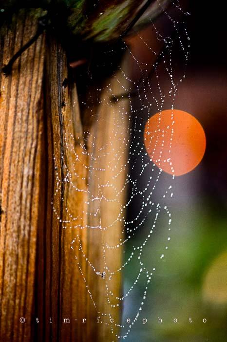Yr6•027-365•1849• Wet Web