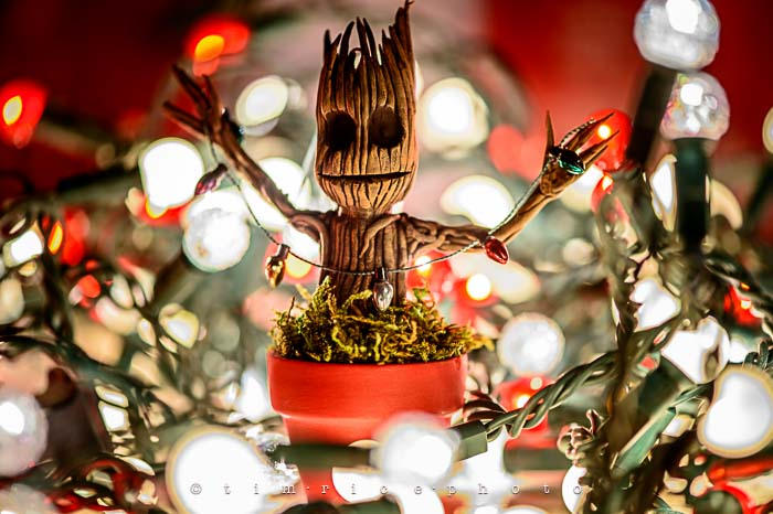 Yr6•064/365•1890 Little Groot December 3, 2014