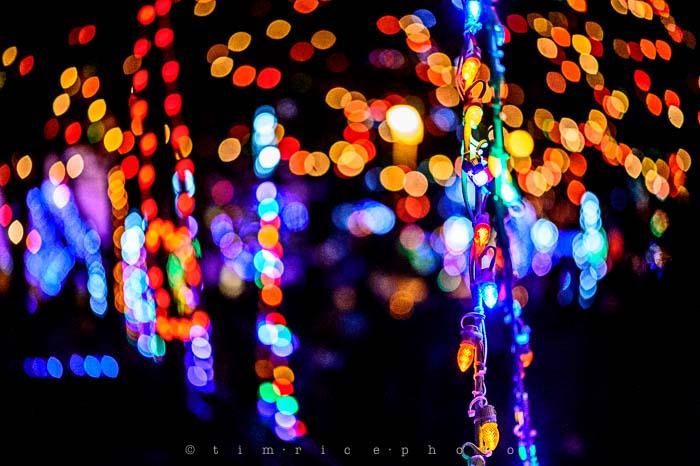 Yr6•099-365•1908•La Salettes Christmas Tree