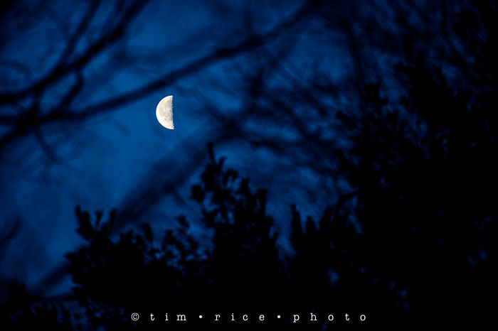 Yr6•105/365•1931 Moon in Trees January 13, 2015