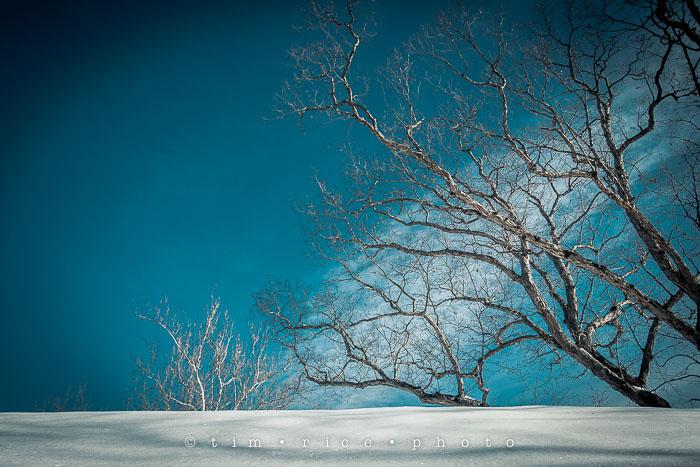 Yr6•127-365•1952•Snow Rise