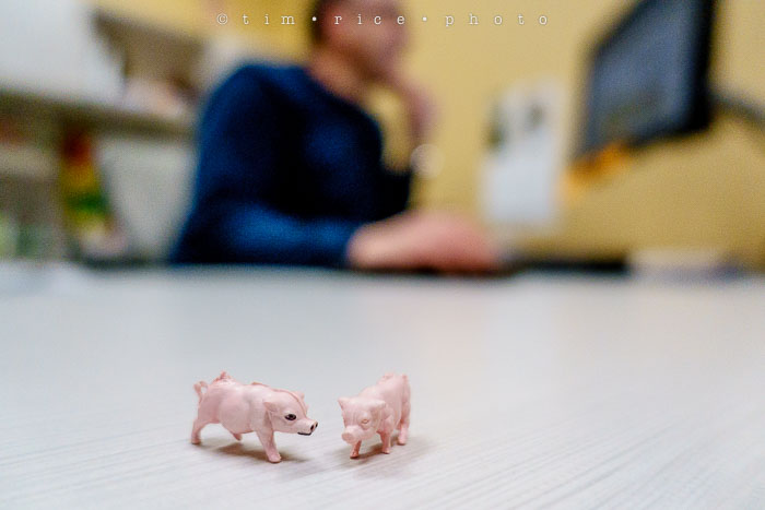 Yr6•157/365•1983 Gary's Pigs March 6, 2015