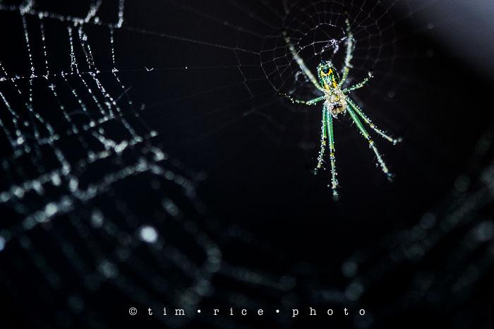 Yr6•245-365•2065•Spider Rise