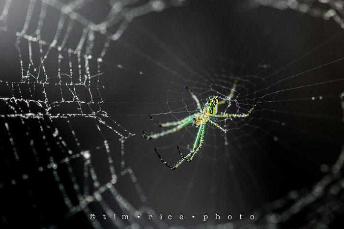 Yr6•246-365•2065•Spider Rise