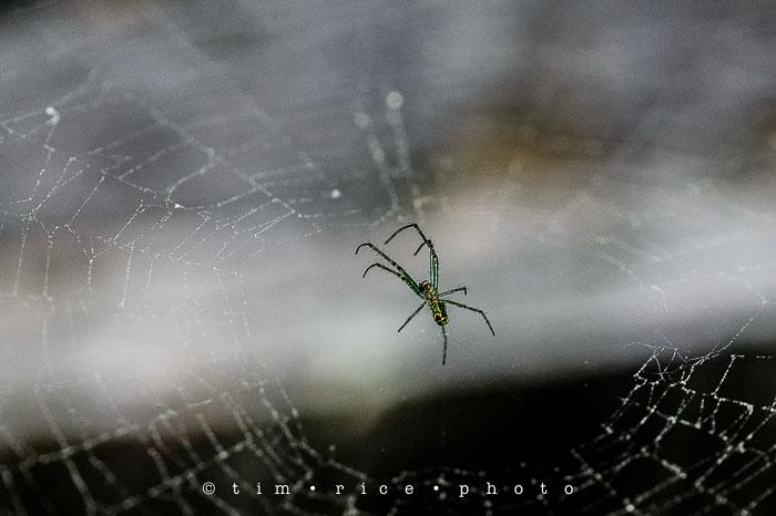 Yr6•247-365•2065•Spider Rise