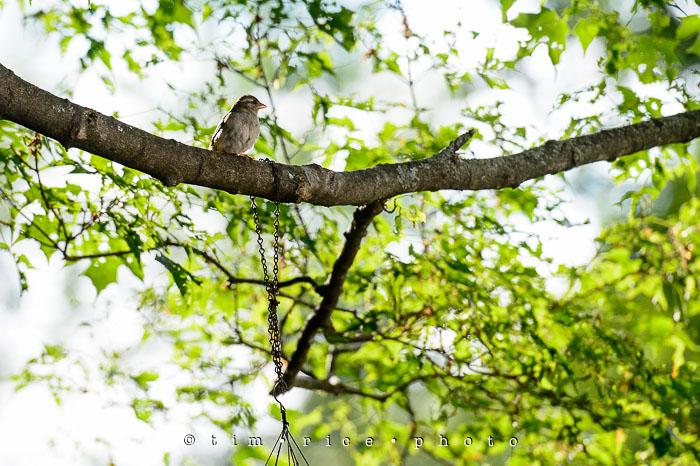 Yr6•249-365•2049•A Bird