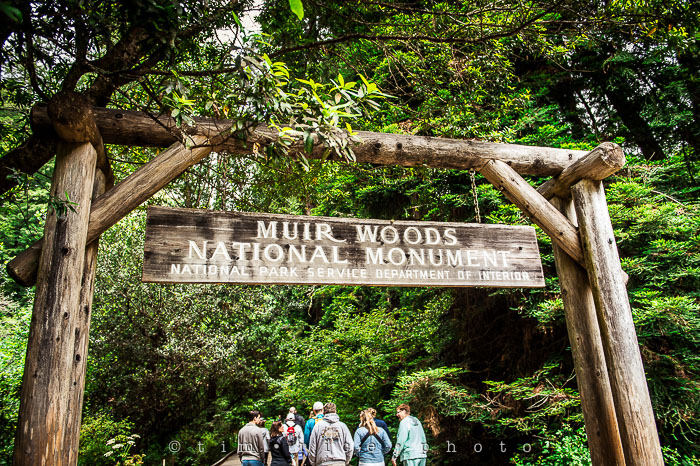 Yr6•272-365•2092•The Muir Woods