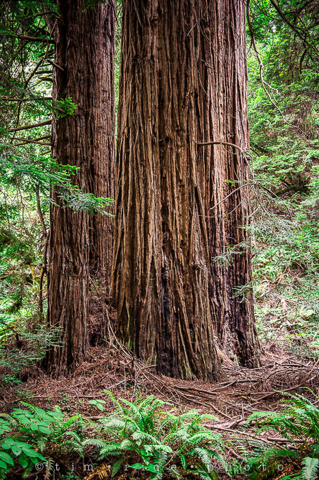 Yr6•273-365•2092•The Muir Woods