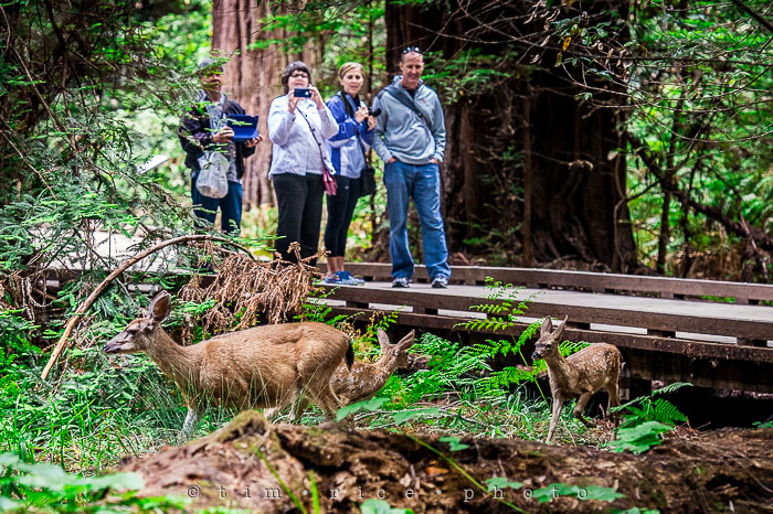 Yr6•275-365•2092•The Muir Woods