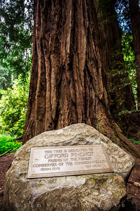 Yr6•276-365•2092•The Muir Woods