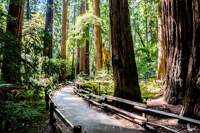 Yr6•282-365•2092•The Muir Woods