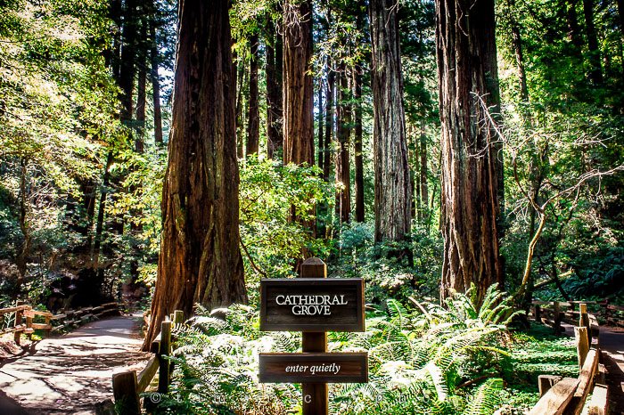 Yr6•284-365•2092•The Muir Woods