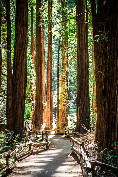 Yr6•285-365•2092•The Muir Woods