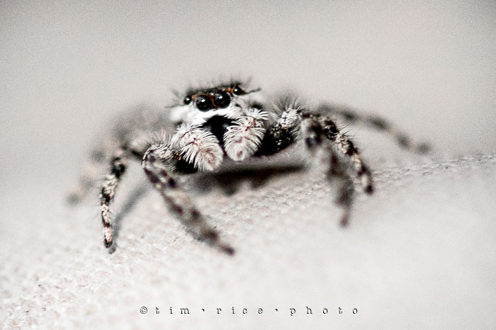 Yr6•344/365•2170 The Watching Spider September 8, 2015